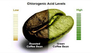 Chlorogenic Acid levels